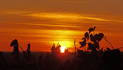 Sunset in Winequarter (lady_sunshine_photos) Tags: sunsetinwinequarter sunset sonnenuntergang weingarten vineyard winequarter weinviertel loweraustria niederösterreich at austria österreich europa europe blätter leafs feuerball fireball ladysunshine ladysunshinephotos sonyalphanex7 wonderfulworld supershot badpirawarth sundown himmel sky red rot orange farbwolke theworldisbeautiful sundaylights