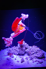 California Sciences Museum (jmarnaud) Tags: usa 2016 california summer family san francisco sciences museum fish color aquarium people