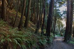 Old Coast Road and Coastal Redwoods, February 2016 (adamkmyers) Tags: coastalredwoods oldcoastroad bigsur pch