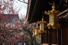 日本 京都奈良5日遊 Koyto&Nara JAPAN_20160225_302 (PS612) Tags: 日本 京都府 北野天滿宮 kitanotenmangushrine sagano kyoto japan spring fujifilmxt10
