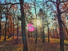 "Kalmagedan Serbia ""in to the woods"" (Nawaf Al-Barwani) Tags: beautiful iphonephoto sunset snapseed landscape scene green environment trees photography iphone6 iphone"