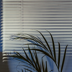 Untitled (James Banko Photography) Tags: wall plant windowlight blinds sunset sonya7 suburbs melbourne lines curtains kodachrome