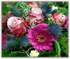 Winter Floral Postcard (swetlanahasenjger) Tags: doublefantasy coth