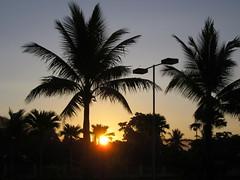 SUNRISE (PINOY PHOTOGRAPHER) Tags: nabua camsur camarines sur coconut tree sunrise morning rinconada bicol bicolandia luzon philippines asia world sorsogon