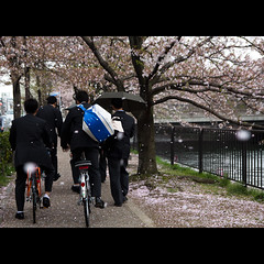 (Masahiro Makino) Tags: street bicycle japan umbrella photoshop canon cherry eos reisen kyoto blossoms adobe 京都 桜 日本 sakura tamron f28 lightroom rainshower highschoolstudents 花吹雪 高校生 1750mm 60d 冷泉通 にわか雨 20120416153514canoneos60dls640p