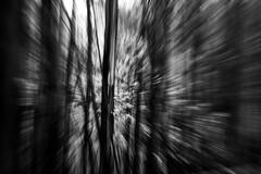 Bosque de eucaliptos del Monte Deva (Angel Alonso canon) Tags: trees bw espaa naturaleza tree byn blancoynegro blanco water forest canon arbol eos blackwhite agua arboles y zoom cloudy negro asturias bosque gijon deva zooming eucalipto duotono nuboso astracto 400d