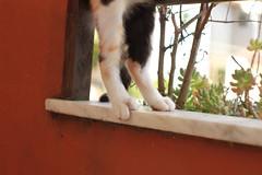 big foot (deadoll) Tags: morning pet cats sun sol animal cat canon fur kitten kat kittens gato 7d gata felino kit pur babycat canon7d catnipaddicts