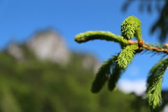 New Tree (Been Around) Tags: tree green austria sterreich spring europe bokeh may eu mai sprout baum obersterreich autriche frhling trieb upperaustria 2013 rettenbach hauteautriche concordians thisphotorocks