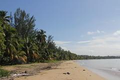 Playa Tres Palmas, Rincn (twiga_swala) Tags: ocean sol beach puerto bay puertorico playa rico porta tropical pr tres boricua rincon palmas baha undeveloped rincn unspoilt aasco portadelsol