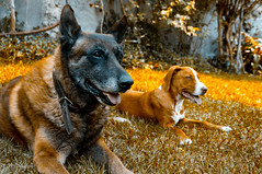 My friends (MiguelBalanzario) Tags: friends brown tree dogs grass mexico day sony belga pitbull rest alpha nex