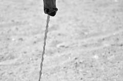 (Ben McCormick) Tags: horsepenis horsecock horsepiss benmccormick wwwbenmccormickcom