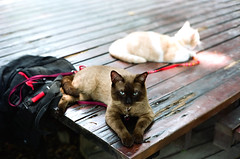 Taipei Walker (Alfred Life) Tags: leica cat canon lens 50mm iso100 tv friend taiwan taipei 台灣 reala 貓 m7 台北市 f095 中正紀念堂 095 nationalchiangkaishekmemorialhall 徠卡
