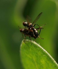 Macro_Photography_fly 10 (kaliphoto) Tags: bug insect canon1855 canon100mm canonrebelxti kenkorings