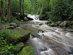 IMGPG15644 - Great Smoky Mountains National Park - Roaring Fork (David L. Black) Tags: nationalparks greatsmokymountainsnationalpark
