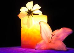 Blacklight blossoms (SolsticeSol) Tags: beautifulflowerpictures beautifulflowerimages