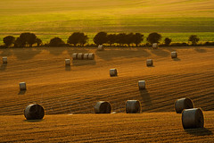 A Time to Reap (S l a w e k) Tags: uk summer england abstract sussex brighton afternoon harvest fields crops bales eastsussex southdowns contrejour stubble saltdean
