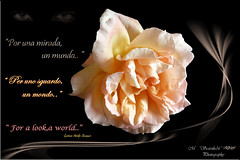 """Por una mirada un  mundo.."" Gustavo Adolfo Bcquer ( MS Jossette D'C IMAGES ) Tags: roses flower nature colors rose cards poetry"