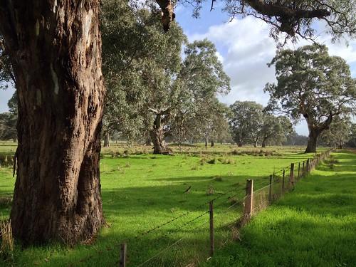 Coleraine, Victoria, Australia