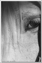 "Mirada de caballo. • <a style=""font-size:0.8em;"" href=""http://www.flickr.com/photos/15452905@N02/10114978295/"" target=""_blank"">View on Flickr</a>"
