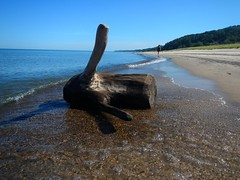 Warren Dunes State Park (tquist24) Tags: park lake water sand nikon state michigan dunes lakemichigan greatlakes driftwood coolpix warren warrendunes warrendunesstatepark aw100 nikoncoolpixaw100