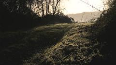 Chemin (Ehjaa) Tags: nature soleil nikon vert chemin givre matin 2015 d3200
