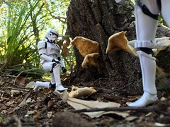 Stormtrooper Adventures [iPhone 6] (Aviator195) Tags: mushroom toy toys actionfigure miniatures miniature starwars funny alien stormtroopers hobby fungi fungus actionfigures empire jedi scifi stormtrooper sciencefiction collectables kneeling collectable droids theforce investigating theempire alienplanet imperialtroops theforceawakens