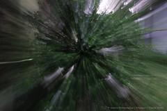 "Nature is in Burst Mode (Sanhita Bhattacharjee) Tags: green nature beauty photography is google nikon flickr zoom best her shows ni burst nikkor mode greenleaf tripura flickrfriday 500px nikkor1835mmlens ""flickraward"" gettyimageartistpicks nikond3100 121click sanhitabhattacharjee beautifultripura"