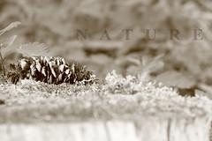 Nature (peter pirker) Tags: wood bw nature canon eos gold austria sterreich natur krnten carinthia gelb gras holz ocker 55d rosegg peterfoto peterpirker widlpark