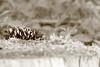 Nature (peter pirker) Tags: wood bw nature canon eos gold austria österreich natur kärnten carinthia gelb gras holz ocker 55d rosegg peterfoto peterpirker widlpark
