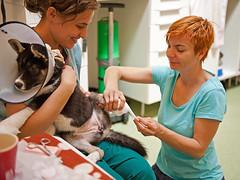 700_8545 Irina, Cristina and Ariel (sarasocke) Tags: street dog vet doctor stray paws bucharest bucuresti