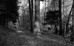 Two Ways to ... - The Dunkeld Hetmitage (Seb_ND) Tags: dunkeld hermitage way autumn