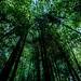 bamboo at noon