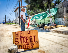 Street Dogs (MaybeSomeday.CA) Tags: dogs street urban help mexico shelter support hungry hot poor bajacalifornia life animals outdoor survive