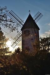 Moulin sous la lumire du soir (Mystycat =^..^=) Tags: moulin windmill moulinsdechaillot soleil france poitoucharentes charentemaritime moulinvent soir