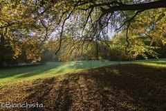 Herbstimpressionen 161029 (Bianchista) Tags: 2016 bianchista herbst oktober rauischholzhausen rauischholzhausenpark
