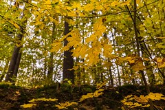 Colorful autumn leaves on trees (tomaskriz1) Tags: autumn leave leaves yellow orange czech moravian trees tree season scene rural outdoors nature natural landscape green grass forest colorful beauty beautiful wonderful
