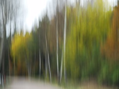 Autumn (evisdotter) Tags: autumn trees colors nature icm intentionalcameramovement sooc hstfrger