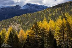 Storms of gold. (Separate Sky) Tags: trentino trentinoaltoadige italy europe mountains mountain montagna dolomiti dolomites lagorai trekking outdoors