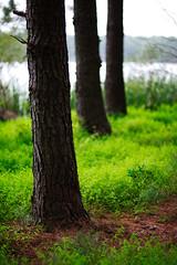 walk about Harris Lake 27 (furrycelt) Tags: harrislake newhillnc nikon85mmf14afd nikon85mmf14 northcarolina shearonharrisreservoir jianwilson photographersoftumblr 85mm d600 nikon september forest furrycelt lake lensblr natural nature trees water woods