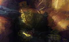 Life is Good. . . (Kathy_9) Tags: pspx9 layers topazimpression kordell feline cat kathy9 hss
