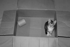 A little cat has come in a box ;) (mcg0011) Tags: box caja gatito kitty cute meinekatze katze hauskatze monchat mykitty migato monocromatico blackwhite blancoynegro bw