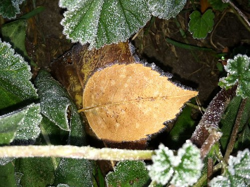 Photo - Sue Herring- First Frost in Heatherwood