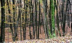10-IMG_6994 (hemingwayfoto) Tags: bahngleis freizeit herbst herbstlaub mittelgebirge november taunus wald wanderung