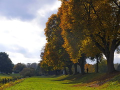 Herbst an der Breg (wulfwalker) Tags: breg herst farbe bunt donaueschingen herbstfarbe herbstlicht park allee