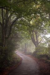 Steamy Lane (Sarah_Brooks) Tags: trees tree woods autumn mist fog path woodland somerset treehugger leaves fall