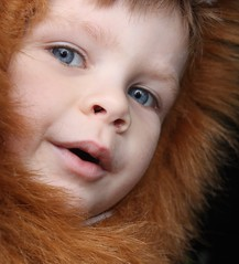 Store list..milk,bread and razors (M.J.H. photography) Tags: lion costume lucien child kid boy halloween trickortreat