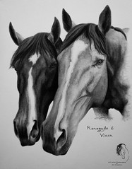 """""""Renegade & Vixen"""" - Commission ( S. D. 2010 Photography) Tags: horse equine buddy buddies portrait faces bw blackandwhite monochrome art painting drawing rendering handdrawn commission"""