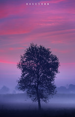 Winter Morning Colors (xeeart) Tags: winter winters morning sunrise landscape landscapephotography pakistan clouds sky tree trees xeeshan canon6d punjab lahore fog mist