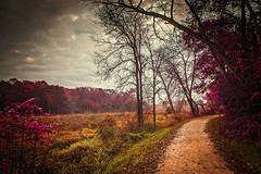 See the Light in the Dark (Anthonypresley1) Tags: landscape illinois anthony presley nature tree trees old retro vintage pink red orange yellow green sky cloud clouds leaf leaves path anthonypresley