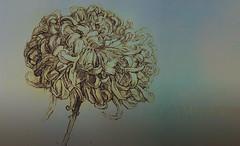 FloresPietMondrian_004 (Visualística) Tags: flores pietmondrian mondrian arte art interpretaciones abstracción paráfrasis versiones análisis flowers flower flor vegetal